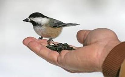 The Backyard Wildbird &amp; Nature Store's <br>  WINTER BIRD SEED SALE