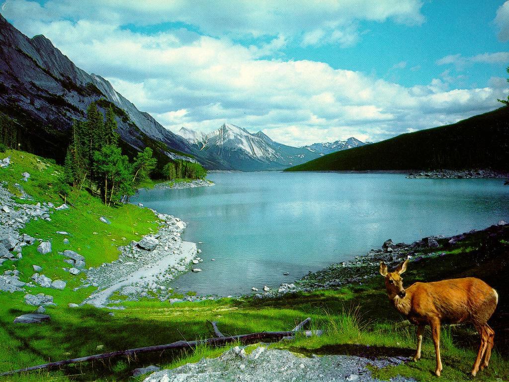 http://3.bp.blogspot.com/-2UoVlwUU8pI/TkSqXDxMUcI/AAAAAAAAAEE/UpklOcxCkjM/s1600/1144848741_1024x768_mountain-and-lake-wallpaper-nature-wallpapers-download.jpg