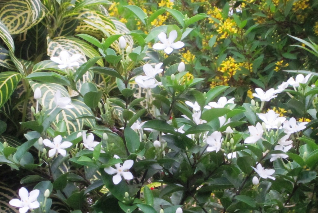 Roberts tropical paradise garden how to make your garden how to make your garden therapeutic with white flowers mightylinksfo