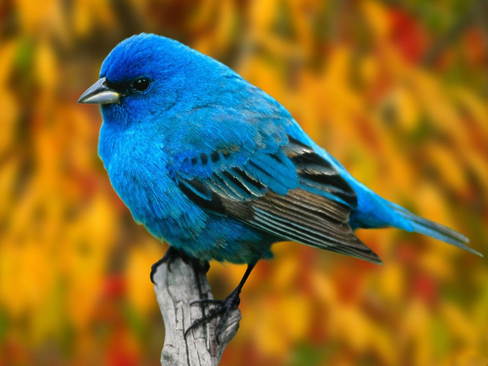 HD WALLPAPERS: ColorfulBirds Desktop wallpapers