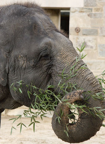 Bamboo Elephant7