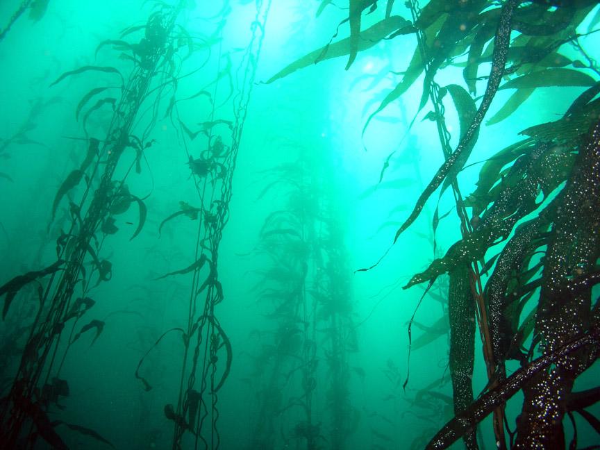 The California Kelp Forest Adventure