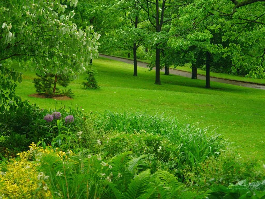Green Rain, Rain Nature Wallpaper (16) | Picture Gallery