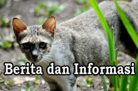 Berita dan Informasi