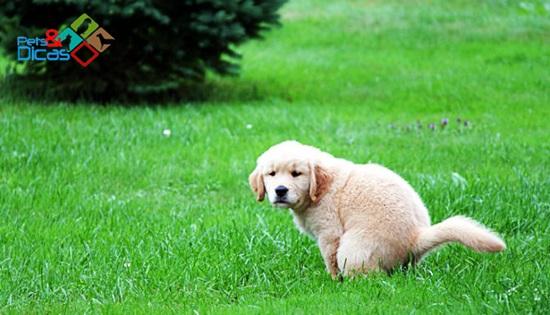 Cão filhote defecando