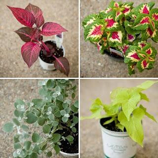 piante da appartamento immagine