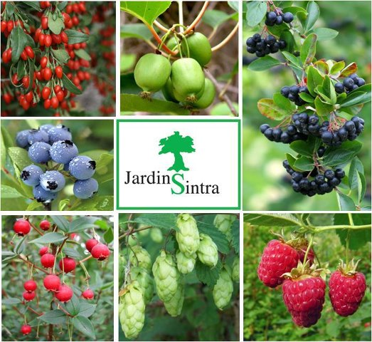 Jardins sintra frutos silvestres - Tipos de flores silvestres ...