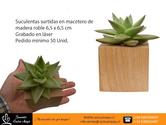 Souvenirs cactus maip for Viveros en maipu
