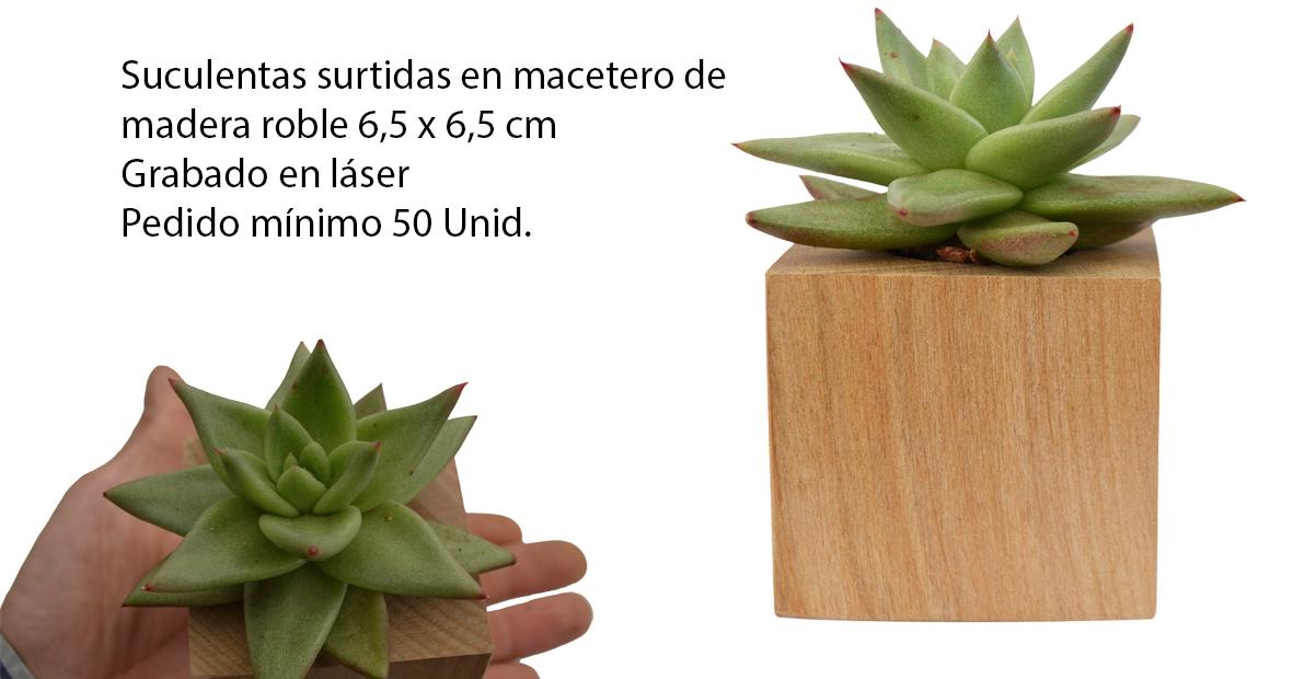 Souvenirs cactus maip suculentas en maceta de roble for Viveros en maipu