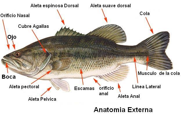 A Pescar en PR: Hablemos del Pez