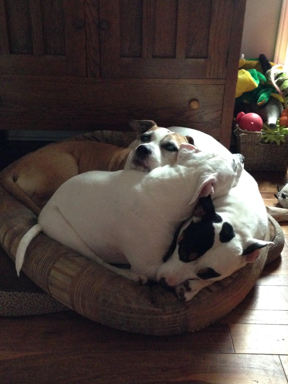I am a DOG! I am an INDIVIDUAL!