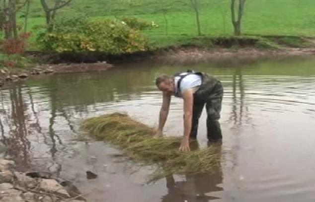 batang tanaman rami flax proses retting