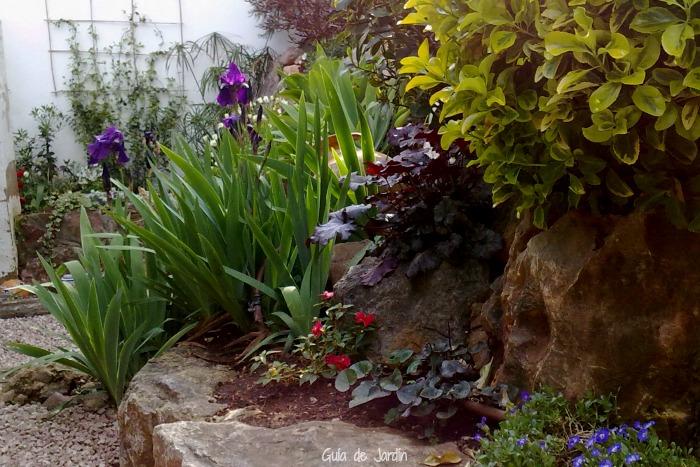 Iris germánica