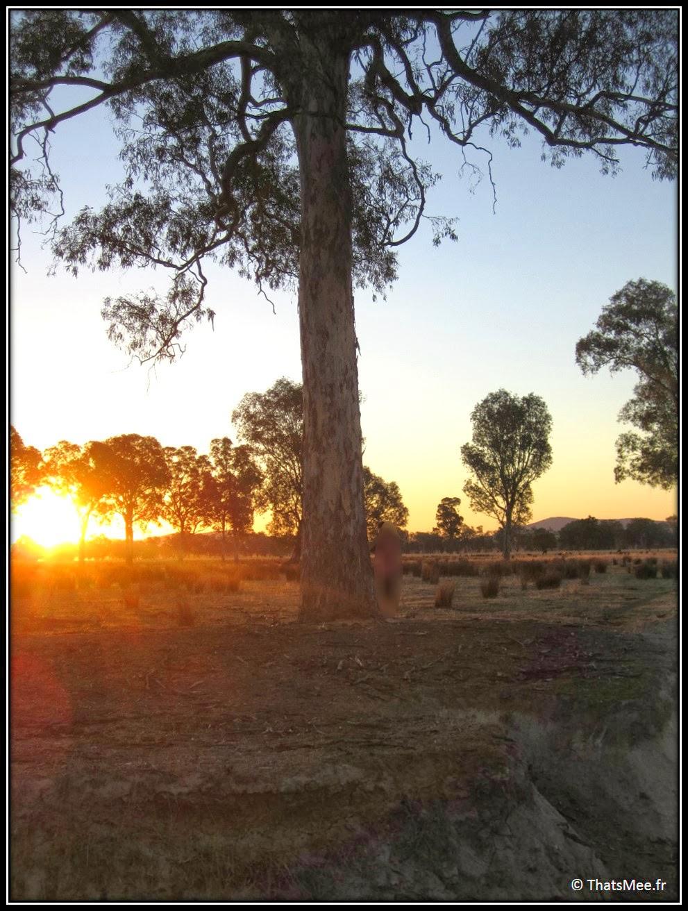 sunset eucalyptus King Valley Milawa Wangaratta Australie campagne Melbourne