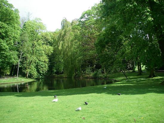 Que significa soñar con parque