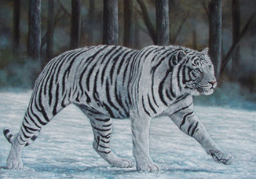 White Tiger Wallpapers Images