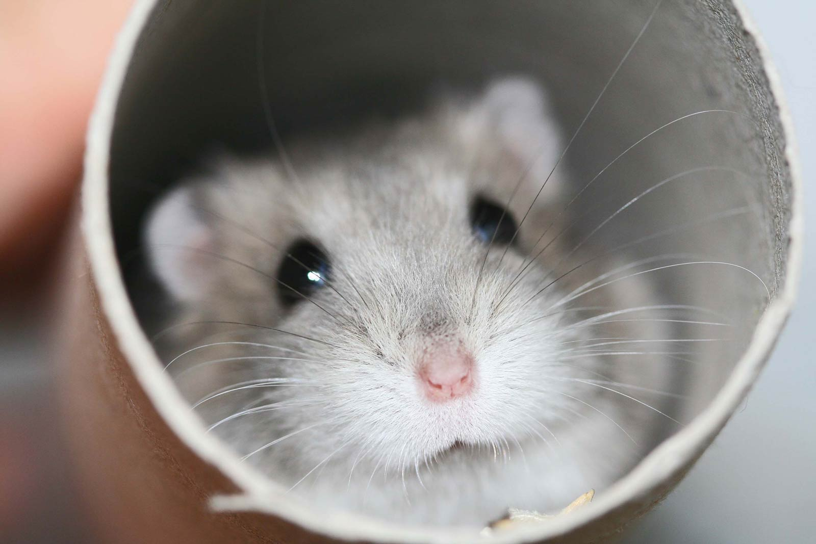 hamsterxxxvideos Some of the most unexpected animals.