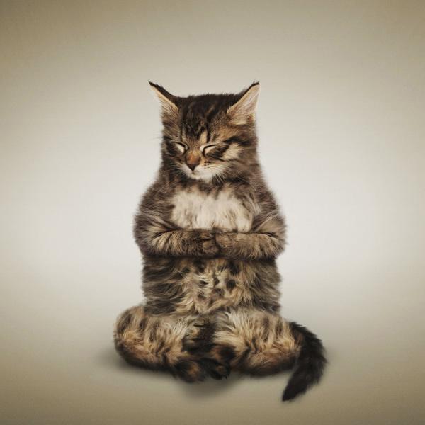 Τα θαυμάσια γατάκια κάνουν γιόγκα