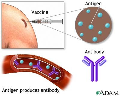 Research how do vaccines work for our immune system