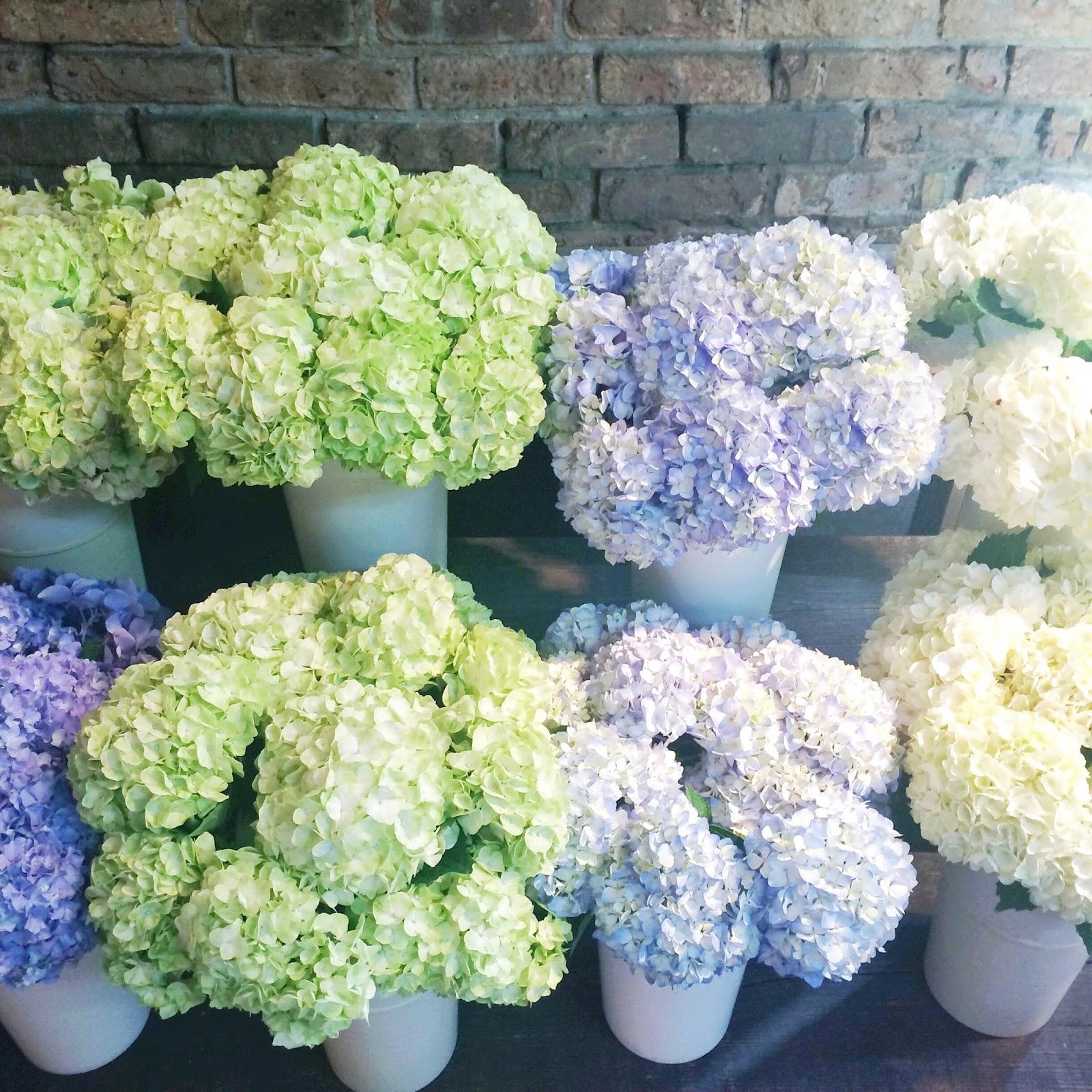 florist-hydrangea