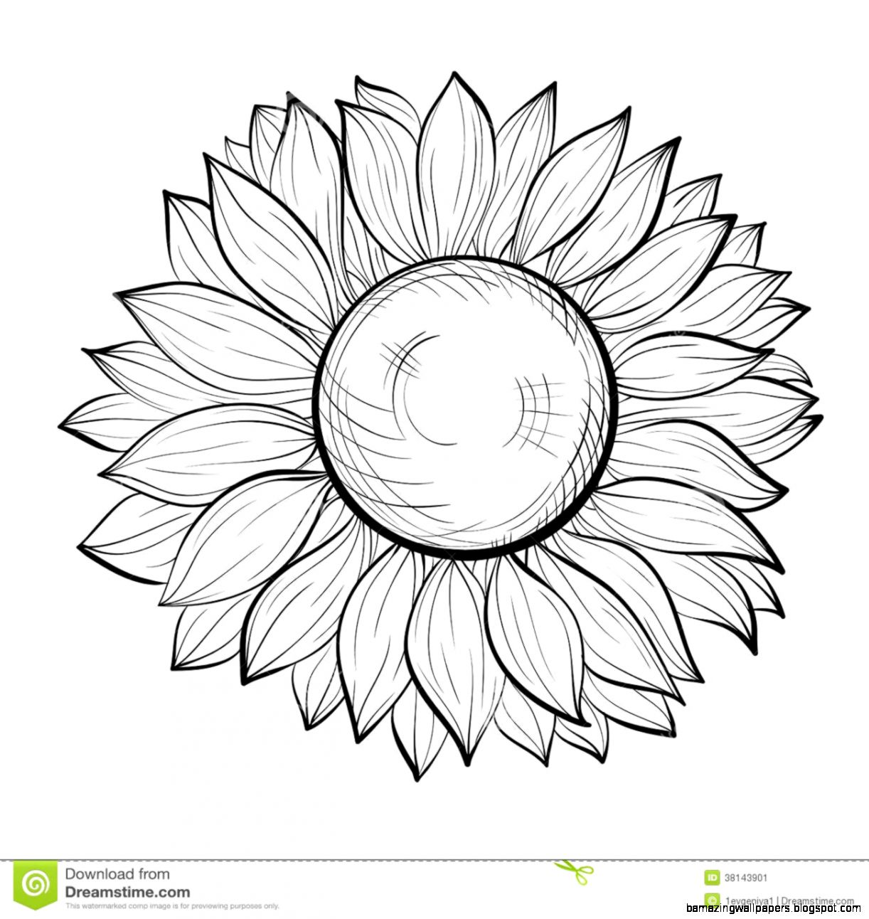Sunflower Outline Clipart   Clipart Kid