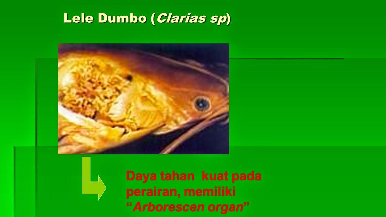 Tehnik Hati Kumpulan Materi Soal Prakarya Amp Wirausaha Tanaman Pangan Amp Budidaya Ikan Kelas X