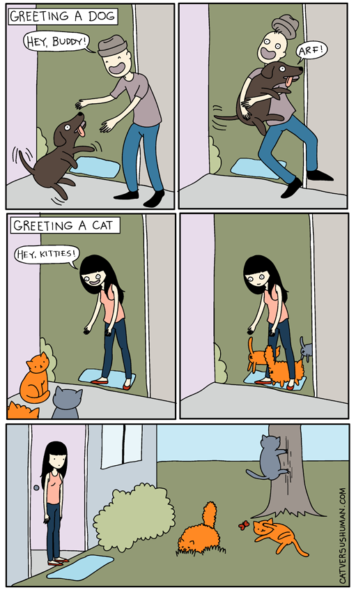 Отличие котов и собак