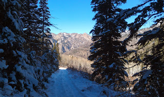 Mineral Fork Trail