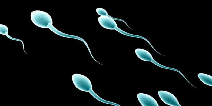 ot-chego-sperma-gorkaya