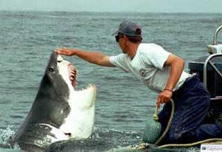 Persahabatan Antara Seorang Nelayan Dengan Hiu Putih