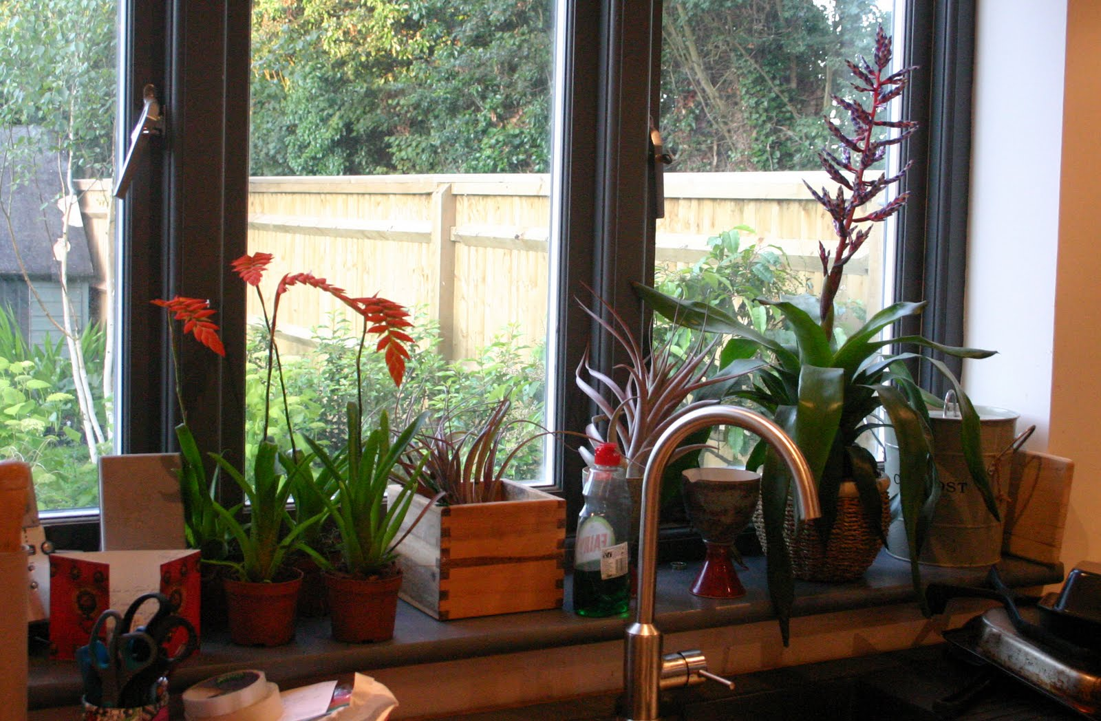 air plants on the kitchen