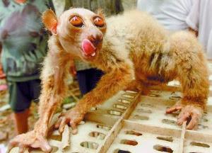 Haiwan Aneh Dijumpai Dan Ditangkap Di China (3 Foto)