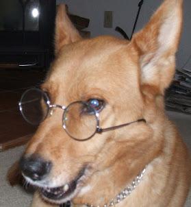Dearest Dingo
