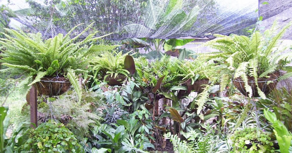 Vivero los chaguaramos plantas ornamentales for Algunas plantas ornamentales
