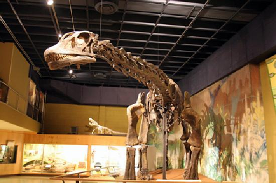 Anniston Alabama Natural History Museum