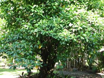Disparitions dans l 39 atelier de gauguin roman jeunesse - Petit arbre decoratif ...