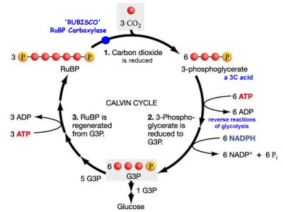 chemical reaction for photosynthesis