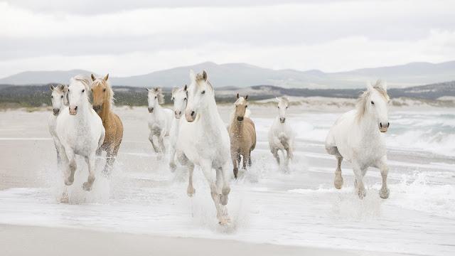 Caballos Corriendo en la Playas Imágenes de Animales