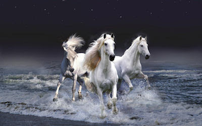 Caballos blancos saliendo del mar - White horses in the sea