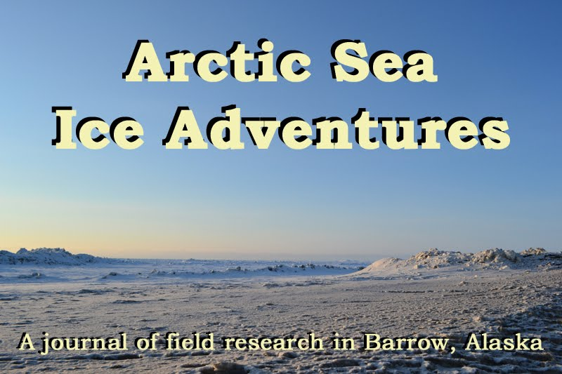 Arctic Sea Ice Adventures