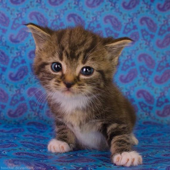 Gambar-gambar anak kucing yang comel Yang Lucu dan Imut