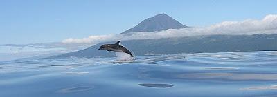 Imagens da Natureza - Ilha do Pico