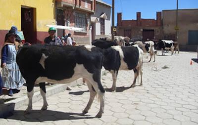 Ganadería en Bolivia