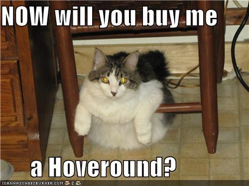 hoveround+cat.jpg