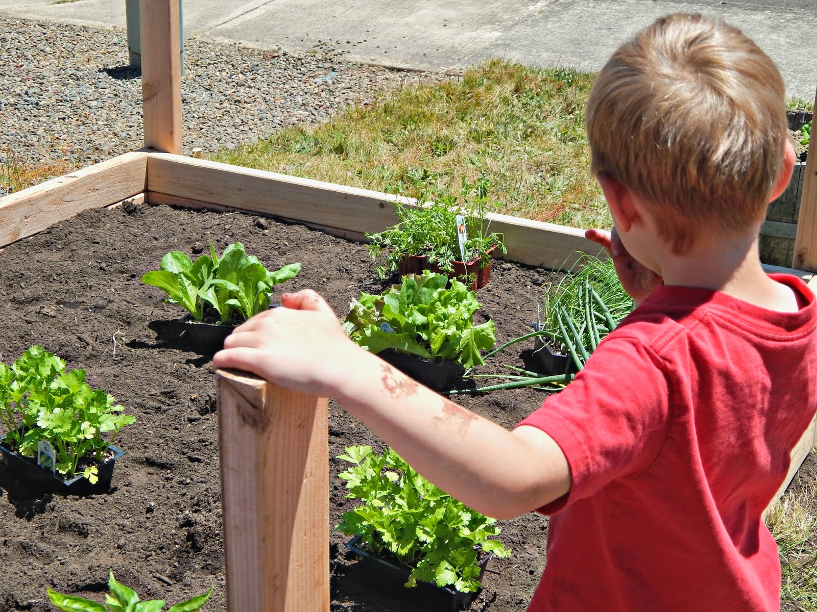 How to Build a Raised Garden #FreshNaturally #Shop #Cbias