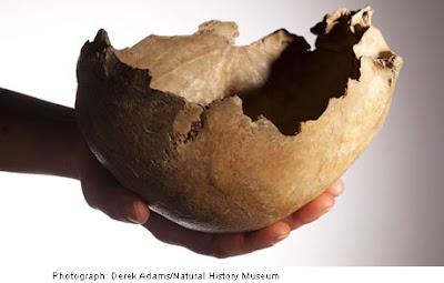 Human skull bowl Cheddar Caves