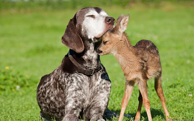 Dog and Baby Deer Animals Friendship HD Wallpaper