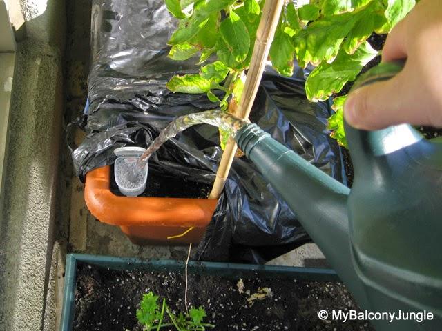 vaso-autoinnaffiante-fai-da-te-riciclare-una-bottiglia-di-plastica-diy-pot-bottle-selfwatering-3