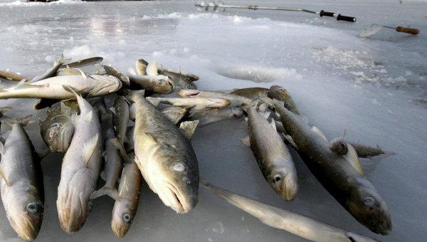 Термос для зимней рыбалки.