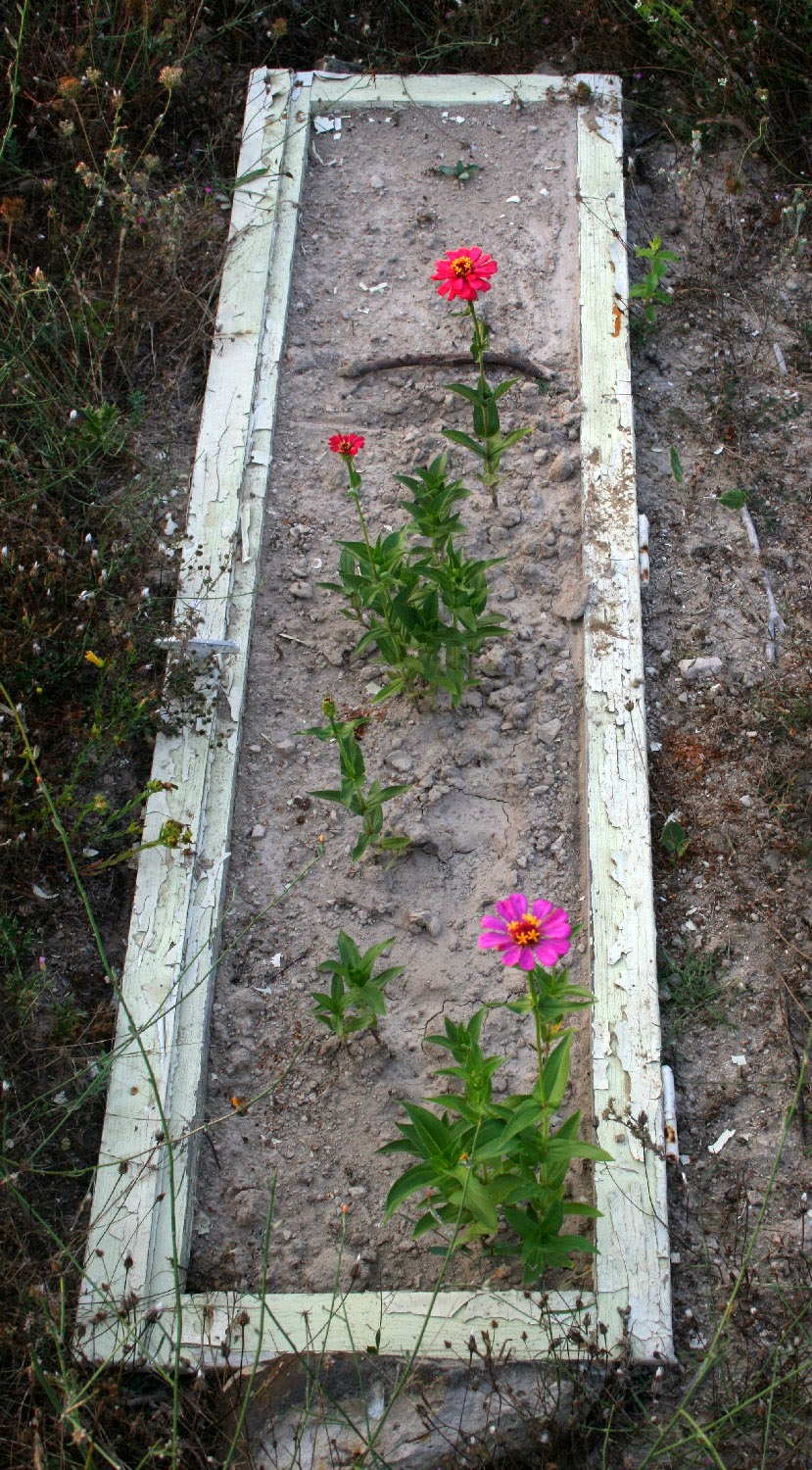 Zinnias are getting there